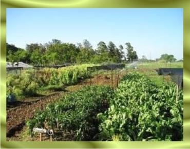1-Cañada-San-Rafael-Luque-Escuela-Agrícola-de-Tarumandy-Río-Salado-arroyo-Aguapey-Paso-Pe-César-Meza-Departamento-Central-huerta