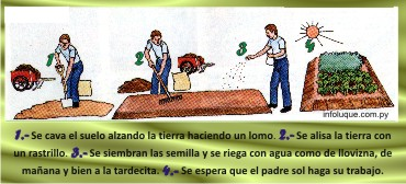 3-Cañada-San-Rafael-Luque-Escuela-Agrícola-de-Tarumandy-Río-Salado-arroyo-Aguapey-Paso-Pe-César-Meza-Departamento-Central-huerta-